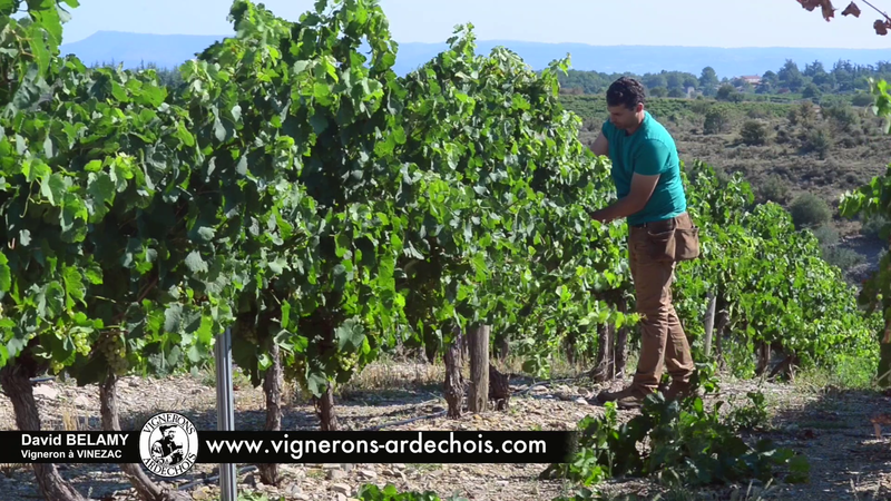 David Belamy - The choice of a cooperative and sustainable viticulture